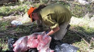 Deboning the elk