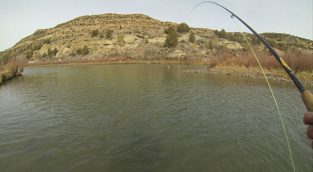 Tight Lines